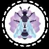 meet-the-bee